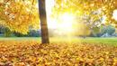 Иде хладна и дъждовна есен