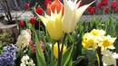 Пролетта иде през февруари. Ехее, вярно ли?