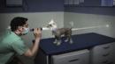 Невероятно умни реклами с участието на животни (СНИМКИ)