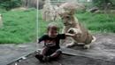 Деца и диви животни в зоопарк! Неочаквано добра компилация (ВИДЕО)