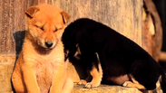 Няма да повярвате в какво тези животни са по-добри от вас (ВИДЕО)