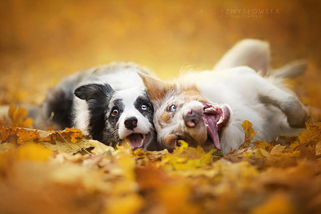 Трогващи портрети на кучета, разкриващи тяхната индивидуалност (СНИМКИ)