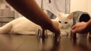 На бас, че тази котка е по-умна от вас (ВИДЕО)