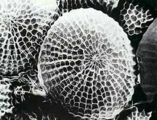 Съкровената тайна на природата. Ефектът на кухите структури