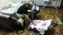 Котка нападна баща, защото смята, че малтретира детето си! (ВИДЕО)
