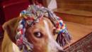 Кучета, които се провалиха в това да са кучета (ВИДЕО)