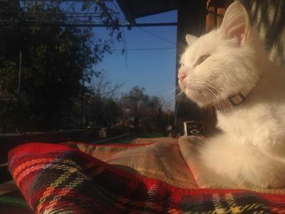 Котка бежанец обиколи Европа, за да намери изгубеното си семейство (ВИДЕО)