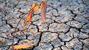 Експерти предупреждават: 2016 г. - незапомнена жега и суша!