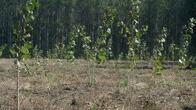 Залесяват 1135 дка нови гори в Североизточна България