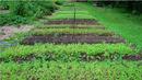 Биопроизводството се разраства, 40% ръст на площите за година