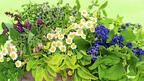 България първа в Европа и 4-а в света по добив и износ на билки