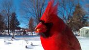 Пилета, които ще ви оставят без думи (СНИМКИ)