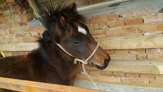 Безобразие! БАБХ уби 4 здрави коня и 2 кучета, нямали документи
