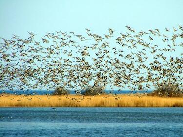 Забраниха достъпа в Дуранкулашкото и Шабленското езеро