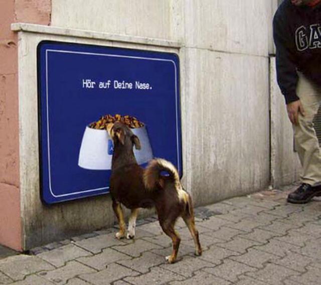 Най-смешните животни на планетата (СНИМКИ)