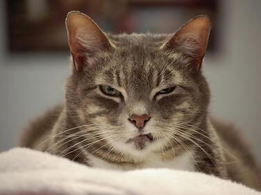 Е, това са най-страшните котки на света (СНИМКИ)