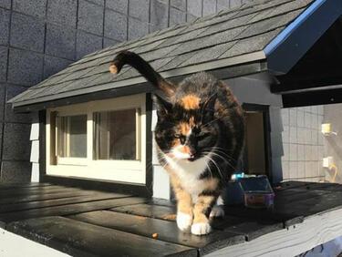 Чували ли сте за полицейска... котка (СНИМКИ)