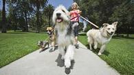 Малко домашни кучета у нас са законни! Няма и 81 000 с чип