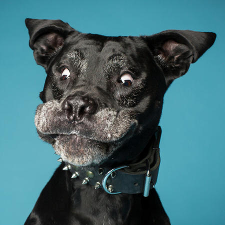 Най-яките кучета, които някога сте виждали (СНИМКИ)