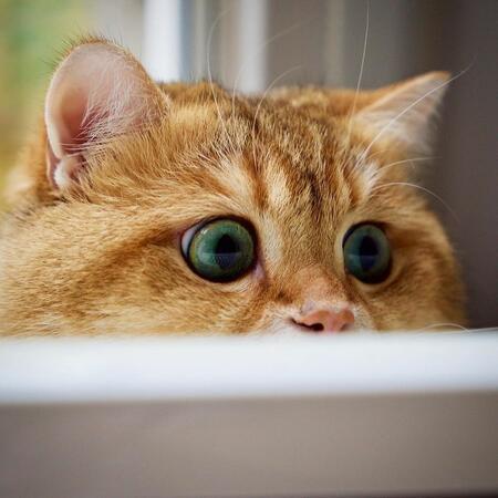 Уникални котешки реакции – втора порция (СНИМКИ)