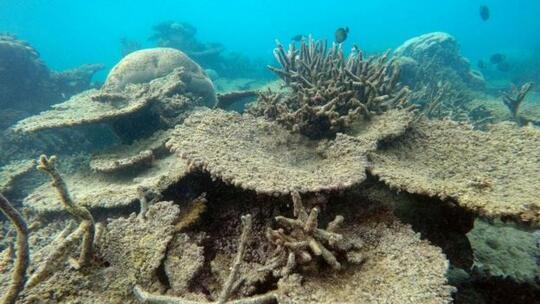 Екокатастрофа! Големият бариерен риф отново побеля (снимки)