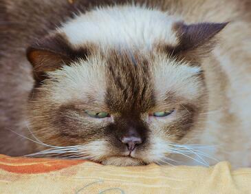 Вижте най-смешните котки на планетата (СНИМКИ)