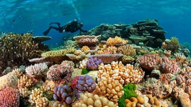 Учени: Големият бариерен риф безвъзвратно умира (СНИМКИ)