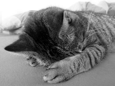 Как да не ви станат симпатични! Ето любимите пози за сън на котките (СНИМКИ)