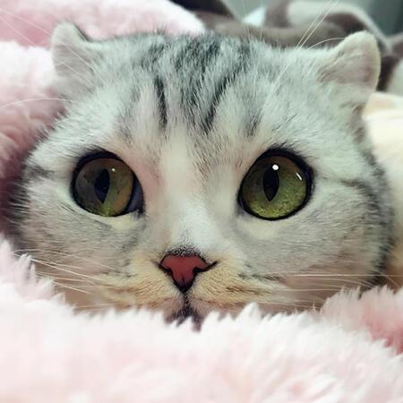 Котката с най-големите и готини очи на света (СНИМКИ)