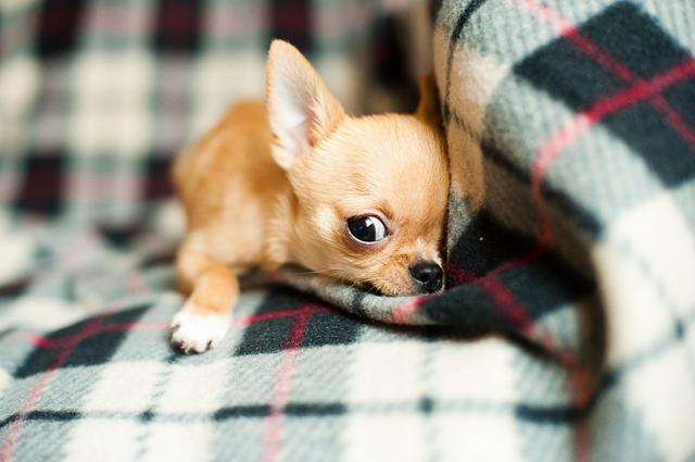 Кой каза, че кучетата не обичат да се завиват (СНИМКИ)