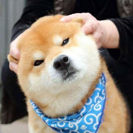 Не е ли това най-якото куче на света (СНИМКИ)
