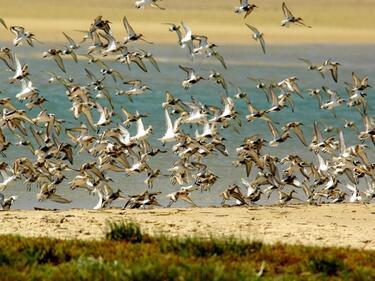 Наши учени ще работят за биоразнообразието по света