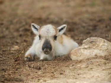 Радост в Родопите! Северно еленче се роди на Гергьовден (СНИМКА)