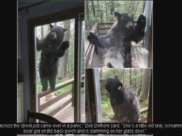 Вижте как мечка атакува къща заради сладкиши (ВИДЕО)
