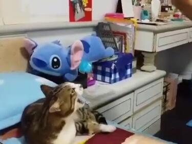 Кой е казал, че котките не могат да пеят?
