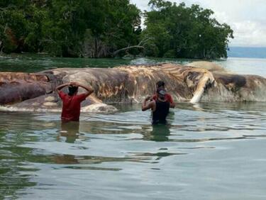 Мистериозно морско чудовище изплува край Индонезия (ВИДЕО)