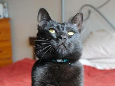 Приют за котки: Кой ще осинови Мистър Бигълс!(СНИМКИ/ВИДЕО)