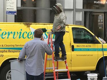 Пчели нападнаха Манхатън (СНИМКИ)