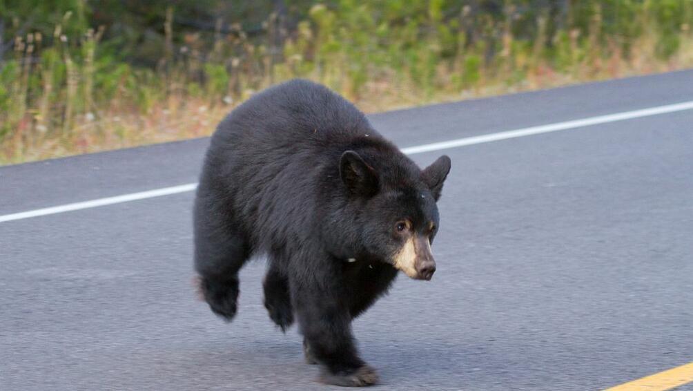 Полицейски служител отФлорида,САЩ, направи опит да завърже разговор сдива мечка,