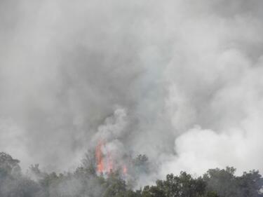 Гората в Кресненско ще се възстановява 40 години