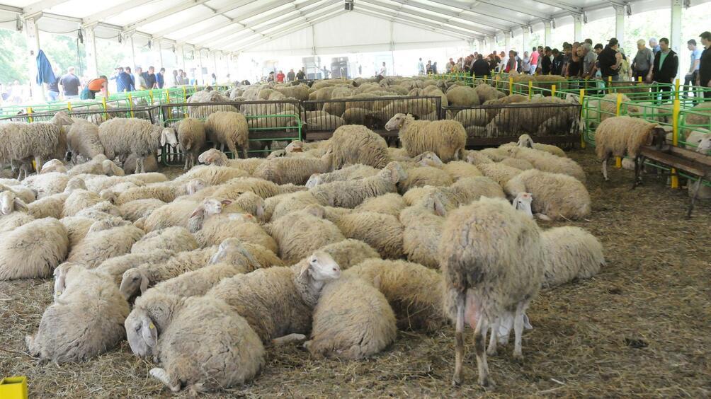 Очаква се да бъде възстановен износът на живи животни за