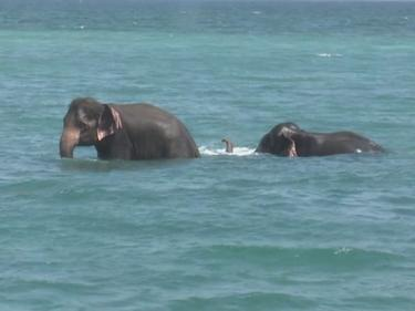 12-часова операция по спасяване на давещи се слонове (ВИДЕО)