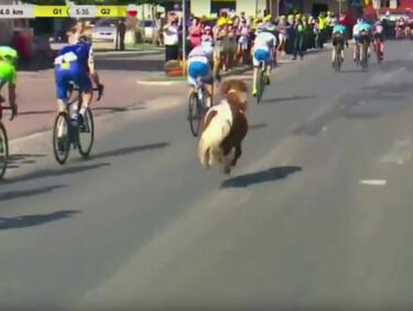 Необикновен участник в колоездачната обиколка на Полша (ВИДЕО)