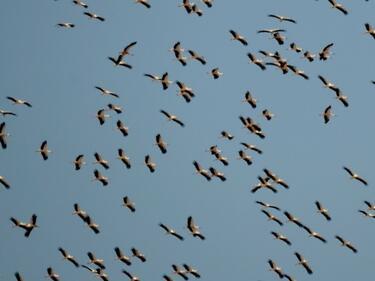Отбелязваме Европейските дни на птиците