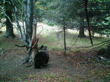 """Парк """"Централен Балкан"""" вече под защитата на ЮНЕСКО"""