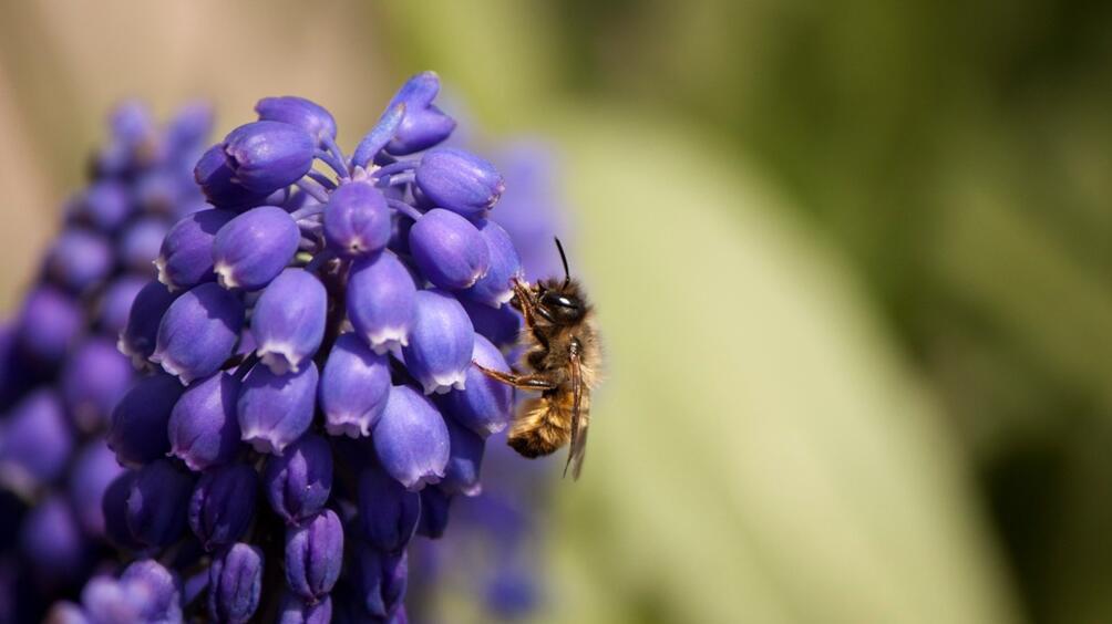 Броят на летящи насекоми, които са от основно значение за