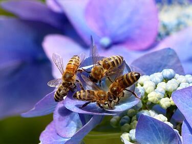 Пчелите различават ляво от дясно и тясно от широко
