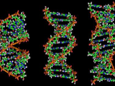 Учени: Спомените могат да се предадат чрез ДНК