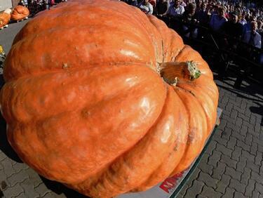 Кои са супер храните за есента