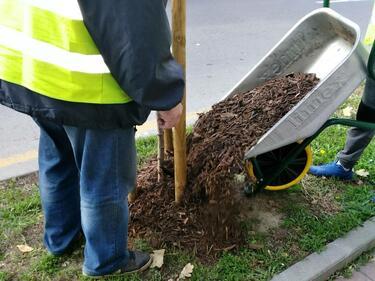 Погрижиха се за над 1000 дървета в София
